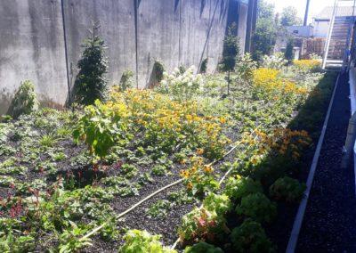 Bepflanzung Gewerbe